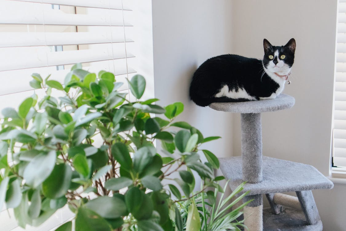Imaging showing a cat sitting on a cat tree.